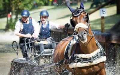 Deutsche Meisterschaft Einspänner – knifflige Fahrt im iWEST-Hindernis