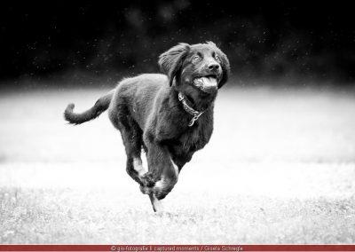 Laufen, Laufen, Laufen....