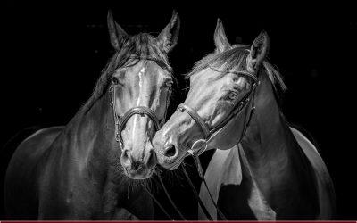 3x 2 und 7x 4 = 36 Beine – Pferdeshooting der Extraklasse